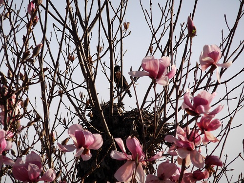 Renewal - Springtime Renewal