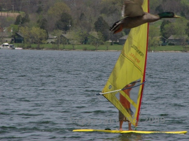 Two Subjects - Weekly Photo Challenge 2012 - Windsurfer and Goose