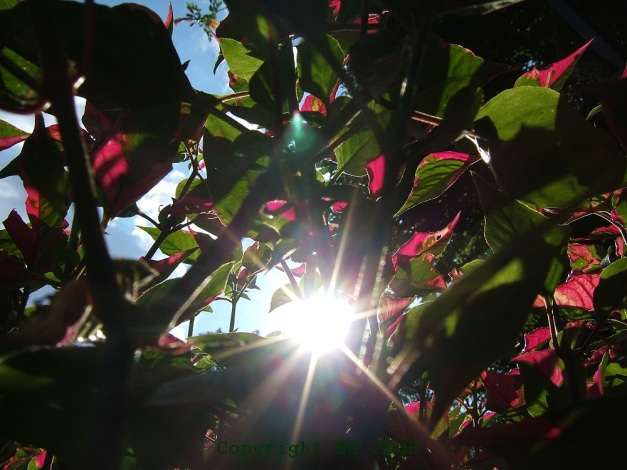 Weekly Photo Challenge: Sun